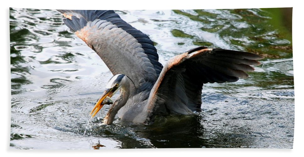 Heron Hand Towel featuring the photograph Great Blue Heron by Larry Ward