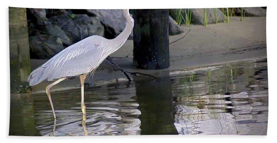 2d Bath Sheet featuring the photograph Great Blue Heron - Mealtime by Brian Wallace