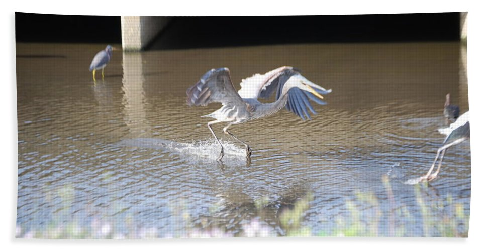 And Stay Out. My Fishing Hole! Florida Hand Towel featuring the photograph Great Blue Heron by Robert Floyd