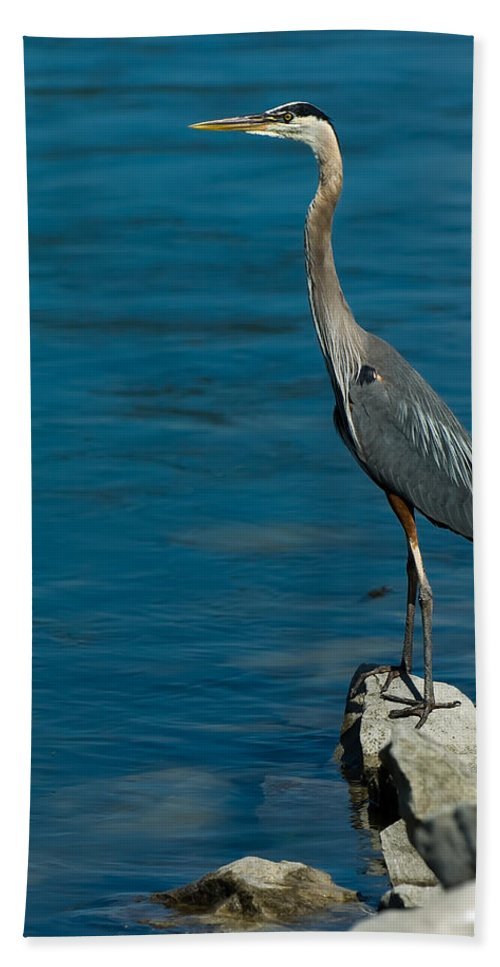 Great Blue Heron Hand Towel featuring the photograph Great Blue Heron by Sebastian Musial