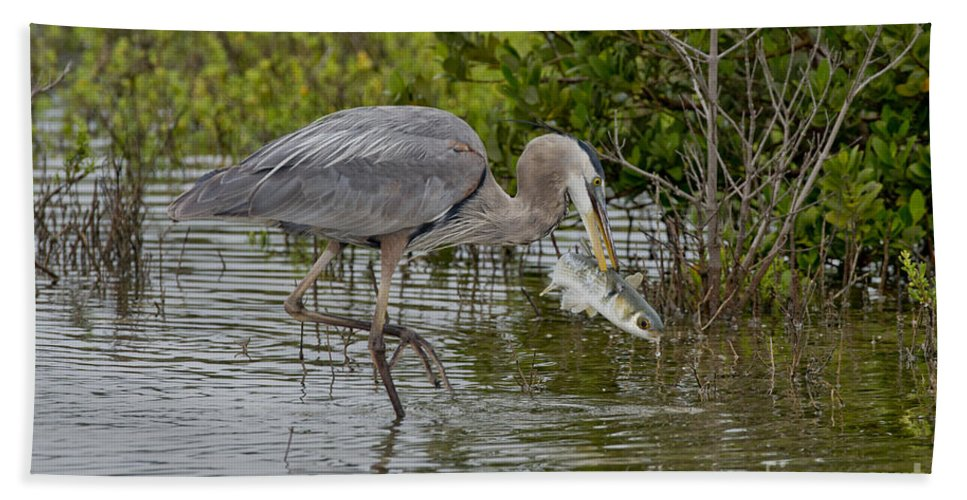 Great Blue Heron Hand Towel featuring the photograph Great Blue Heron With Fish by Anthony Mercieca