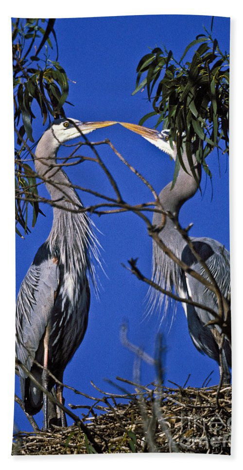 Great Blue Herons Bath Sheet featuring the photograph Great Blue Herons by Howard Stapleton