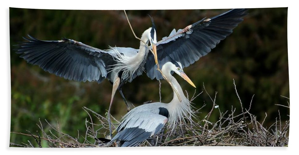 Heron Hand Towel featuring the photograph Great Blue Herons Nesting by Sabrina L Ryan