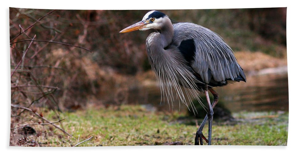 Bath Sheet featuring the photograph Great Blue On The Clinch River IIi by Douglas Stucky