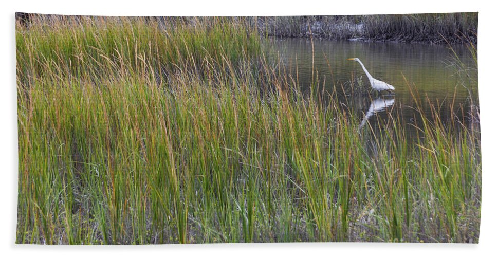 Great Egret Hand Towel featuring the photograph Great Egret by Diane Macdonald