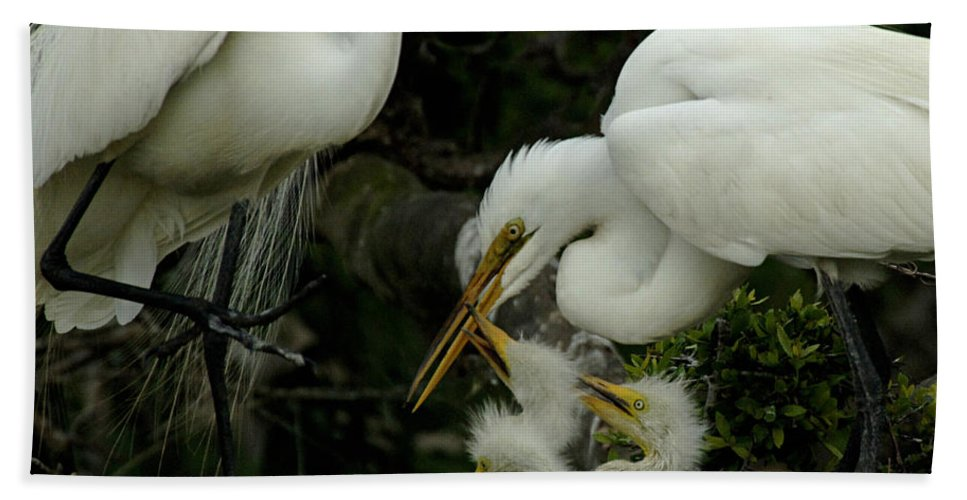 Great Egret Family Hand Towel featuring the photograph Great Egret Family 2 by Bob Christopher