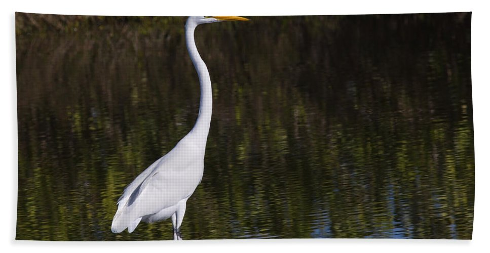 Birds Bath Sheet featuring the photograph Great Egret Standing Out by John M Bailey