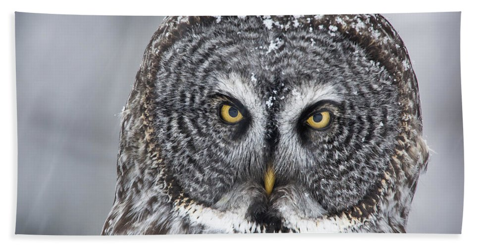 Nis Bath Towel featuring the photograph Great Gray Owl Scowl Minnesota by Benjamin Olson