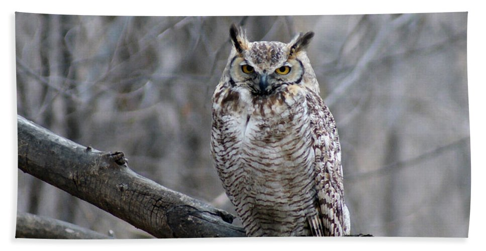 Birds Bath Sheet featuring the digital art Great Horned Owl by Ernie Echols