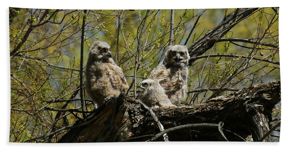 Birds Hand Towel featuring the photograph Great Horned Owlets 1 by Ernie Echols