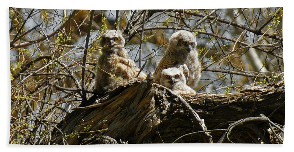 Birds Hand Towel featuring the photograph Great Horned Owlets Photo by Ernie Echols