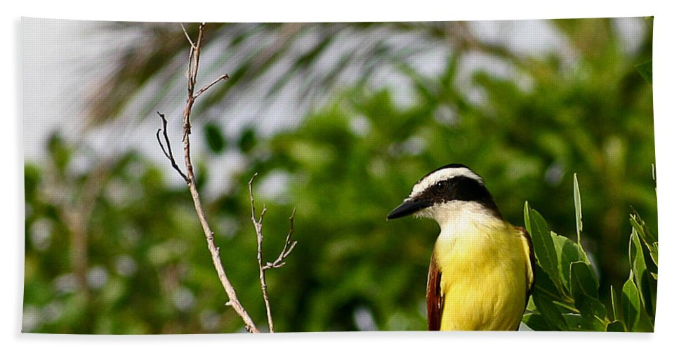 Great Hand Towel featuring the photograph Great Kiskadee by Rebecca Morgan