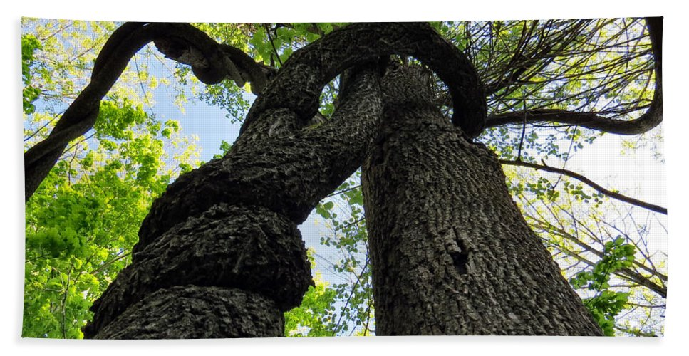 Tree Hand Towel featuring the photograph Great Spirits by Art Dingo