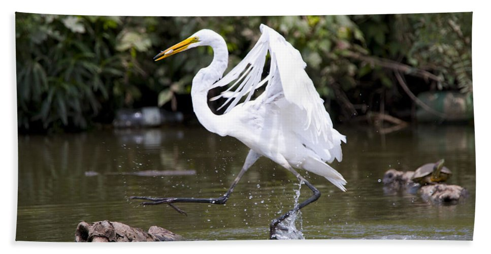 Bath Sheet featuring the photograph Great White Egret And Turtle Friends1 by Vernis Maxwell