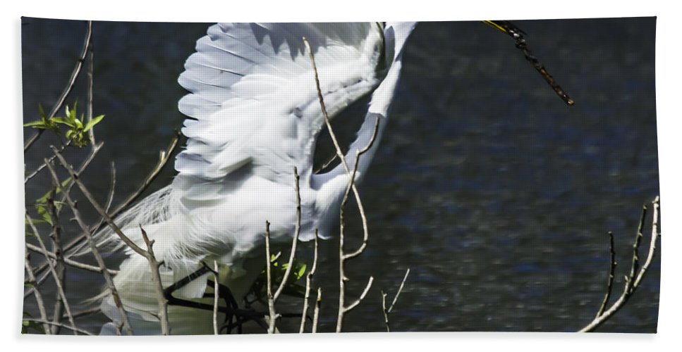 susan Molnar Hand Towel featuring the photograph Great White Egret Building A Nest V by Susan Molnar