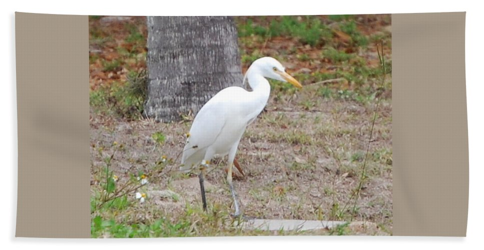 Feeding Pose Hand Towel featuring the photograph Great White Egret by Robert Floyd