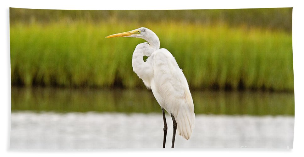 Marsh Hand Towel featuring the photograph Great Egret by Scott Pellegrin