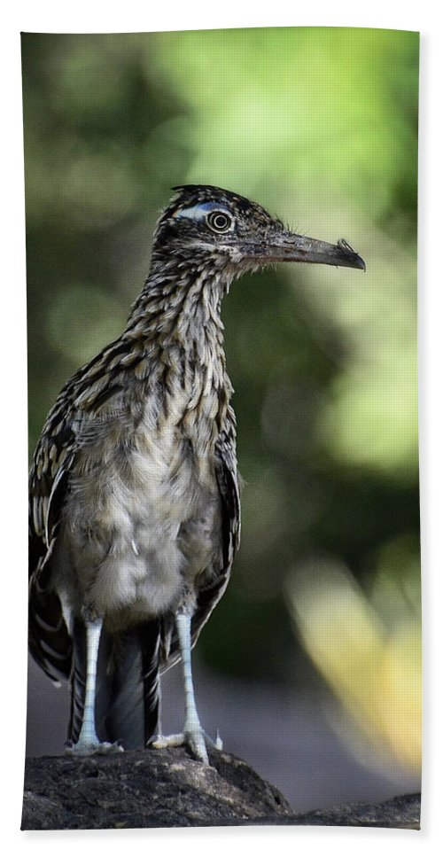 Greater Roadrunner Bath Sheet featuring the photograph Greater Roadrunner by Saija Lehtonen