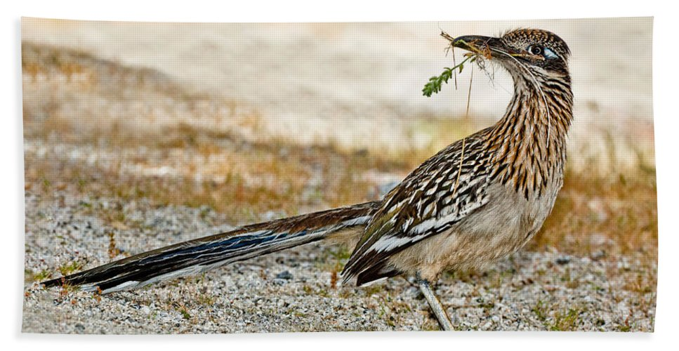 Animal Hand Towel featuring the photograph Greater Roadrunner With Nest Material by Anthony Mercieca