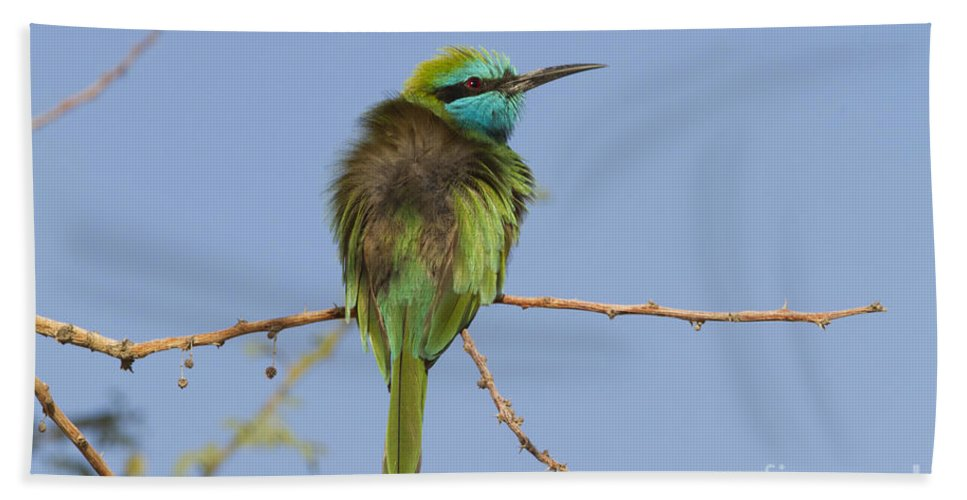 Green Bee-eater Hand Towel featuring the photograph Green Bee-eater Merops Orientalis by Eyal Bartov