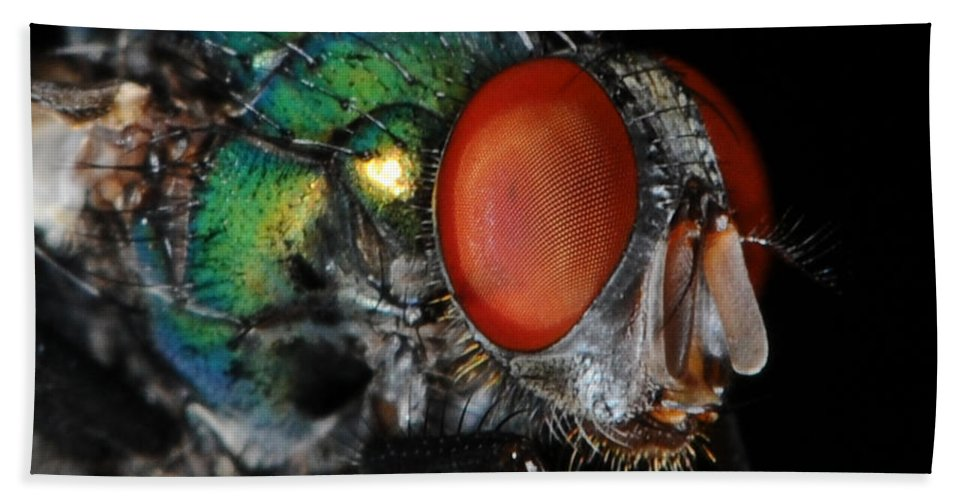 Green Bottle Fly Hand Towel featuring the photograph Green Bottle Fly by Paul Ward