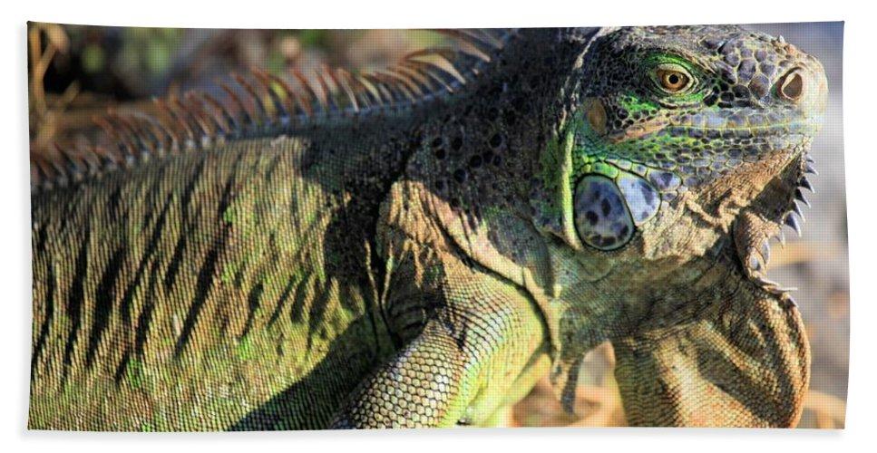 Iguana Bath Sheet featuring the photograph Green Day by Adam Jewell