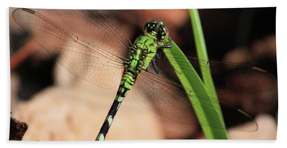 Green Dragonfly Bath Towel featuring the photograph Green Dragonfly On Grass Square by Carol Groenen