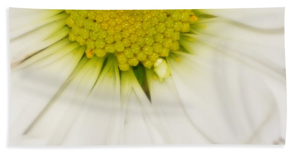 Digital Photograph Bath Sheet featuring the photograph Green Fades To White by Laurie Pike