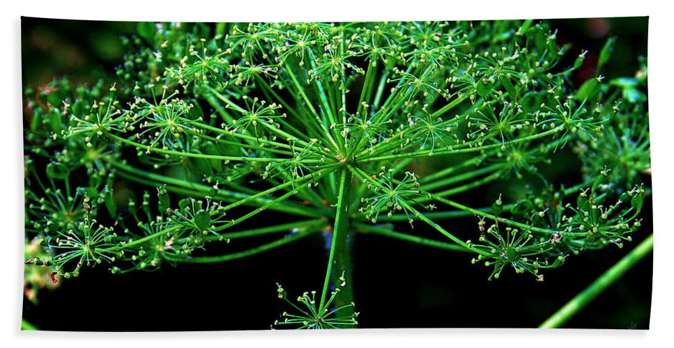 Flower Hand Towel featuring the photograph Green Frills II by Jeanette C Landstrom