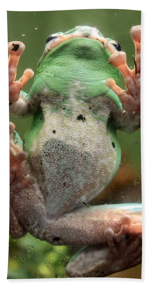 Green Hand Towel featuring the photograph Green Frog by Munir Alawi