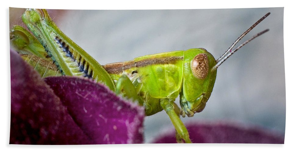 Bug Hand Towel featuring the photograph Green Grasshopper I by David and Carol Kelly