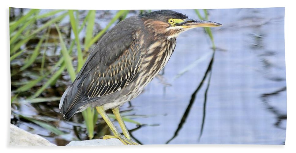 Heron Bath Sheet featuring the photograph Green Heron 2 by Bonfire Photography