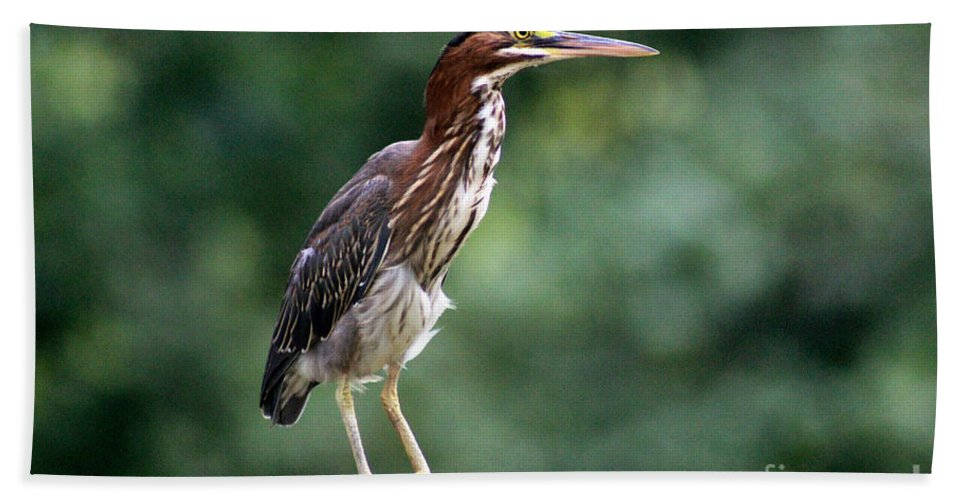 Shorebird Hand Towel featuring the photograph Green Heron 2 by Karen Adams