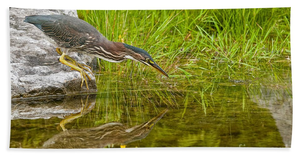 Green Heron Bath Sheet featuring the photograph Green Heron Pictures 534 by World Wildlife Photography