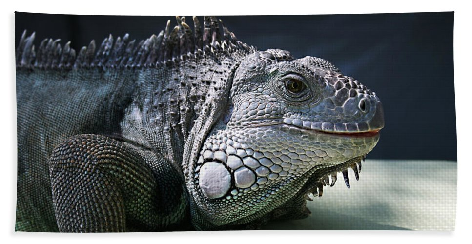 Green Iguana Hand Towel featuring the photograph Green Iguana 1 by Ellen Henneke