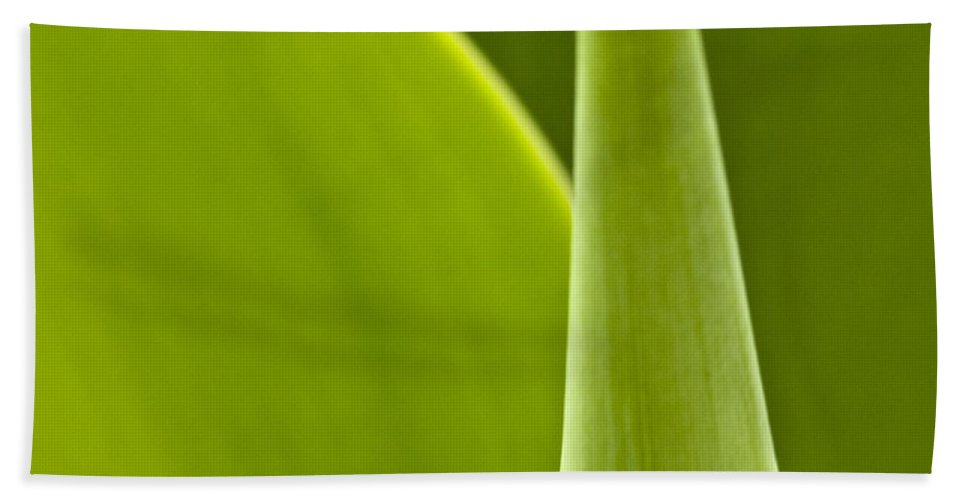 Leaf Bath Sheet featuring the photograph Green Leaves Series 1 by Heiko Koehrer-Wagner