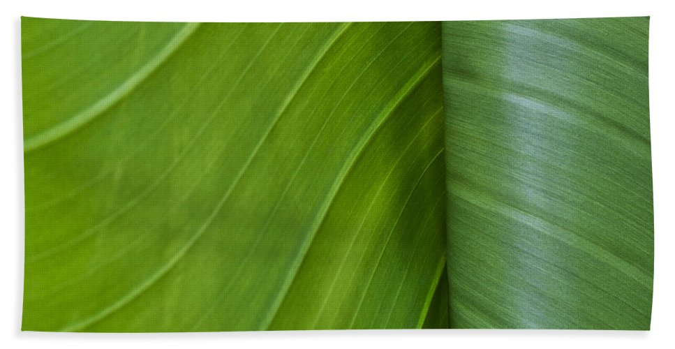 Leaf Bath Sheet featuring the photograph Green Leaves Series 6 by Heiko Koehrer-Wagner
