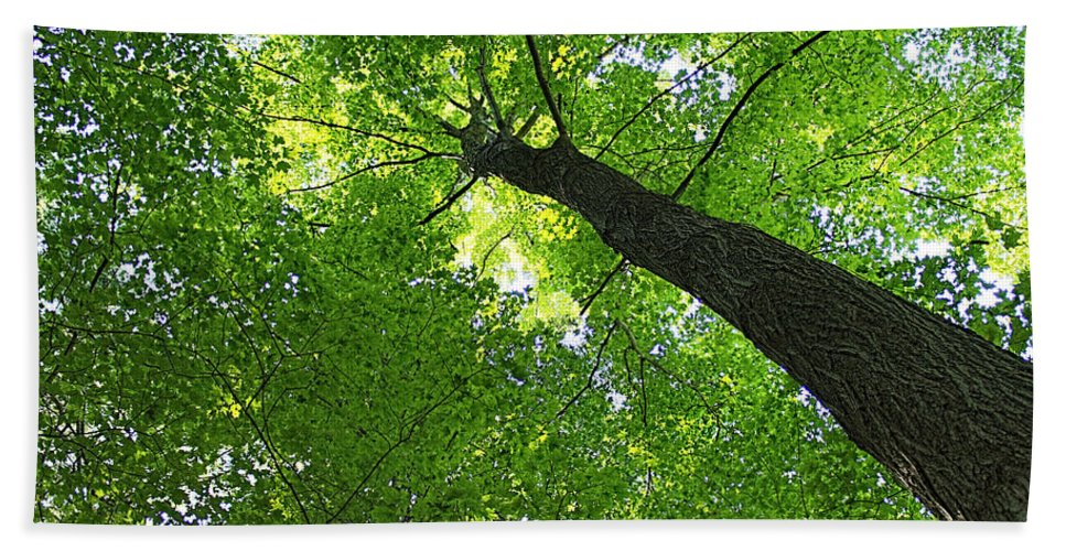 Tree Hand Towel featuring the photograph Green Maple Canopy by Barbara McMahon