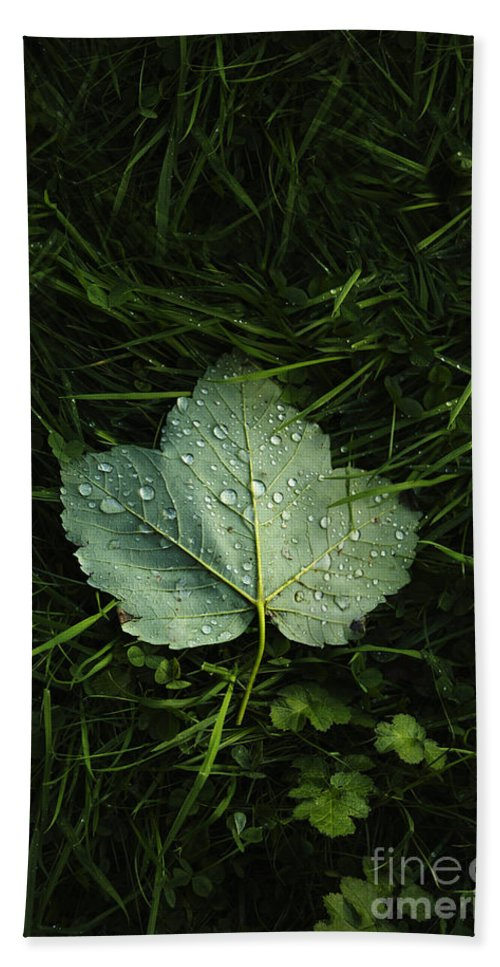 Leaf Hand Towel featuring the photograph Green On Green by Margie Hurwich