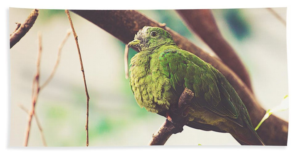 Wildlife Bath Sheet featuring the photograph Green Pigeon by Pati Photography