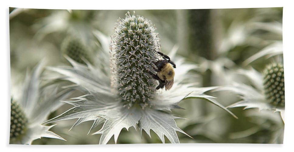 Thistle Bath Sheet featuring the photograph Green Thistle by Eunice Gibb