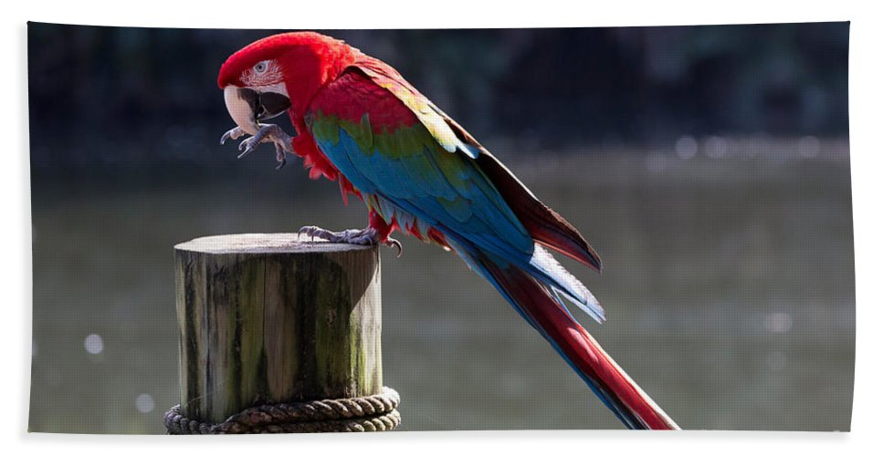 Green-winged Macaw Hand Towel featuring the photograph Green-winged Macaw by Louise Heusinkveld