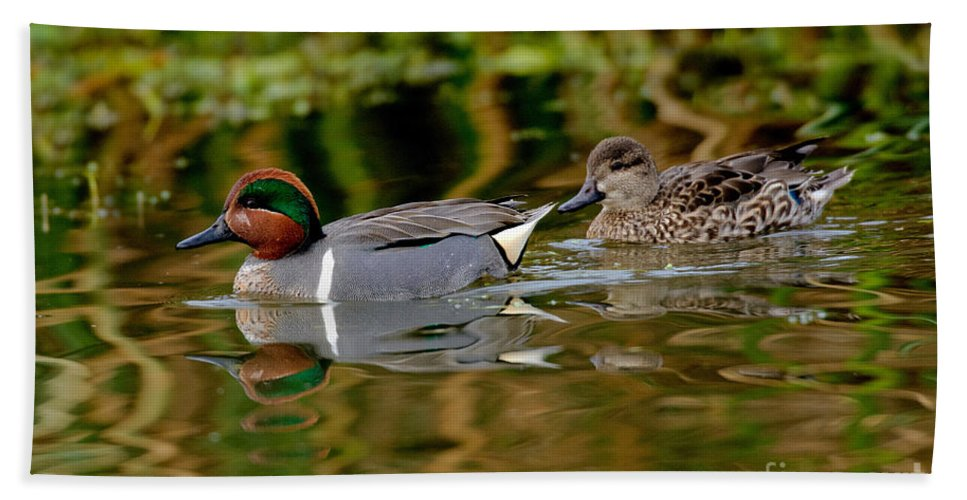 Fauna Hand Towel featuring the photograph Green-winged Teal Pair by Anthony Mercieca