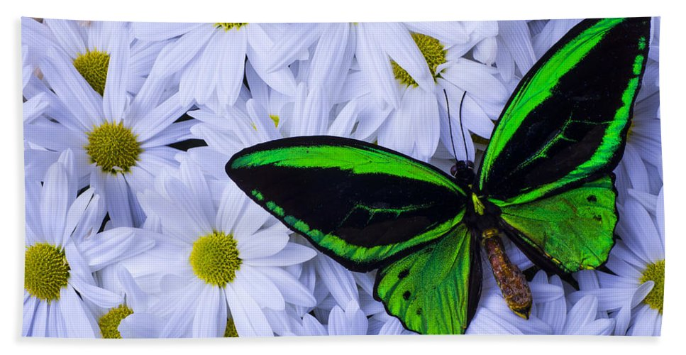 Beautiful Hand Towel featuring the photograph Green Wings In The Mums by Garry Gay
