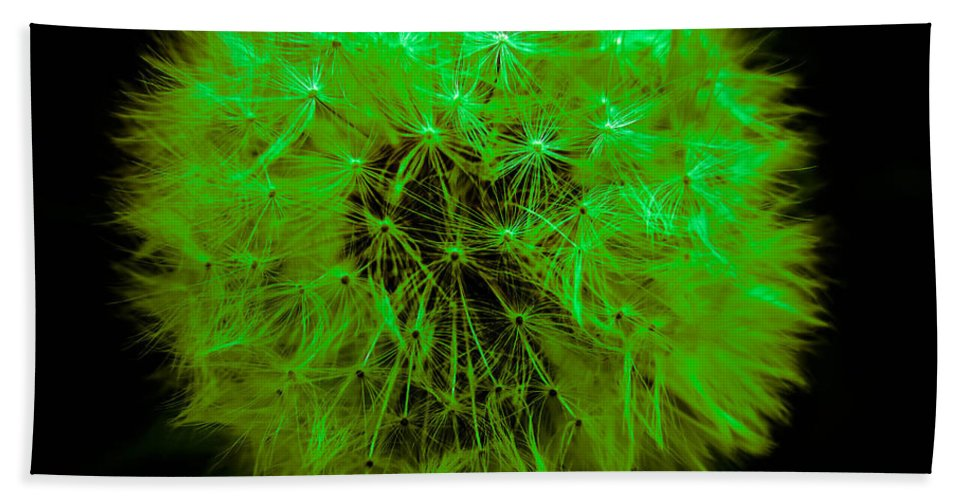 Dandelion Hand Towel featuring the photograph Green Yellow Dandelion by Sherman Perry