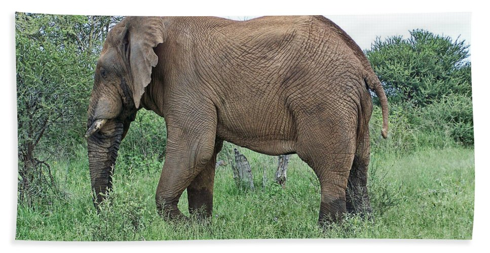 Elephant Bull Bath Sheet featuring the photograph Greener Pastures-after The Rains by Douglas Barnard