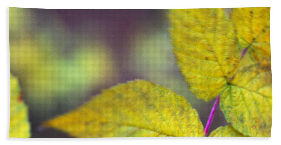 Nature Hand Towel featuring the photograph Greenleaf by Walter Murdock