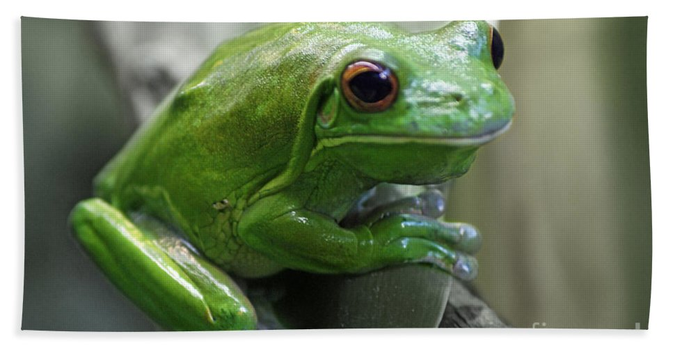Frog Bath Sheet featuring the photograph Greeny 5 by Ben Yassa