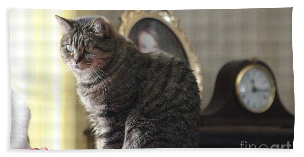 Cat Bath Sheet featuring the photograph Greeting Card Cat by Michelle Powell