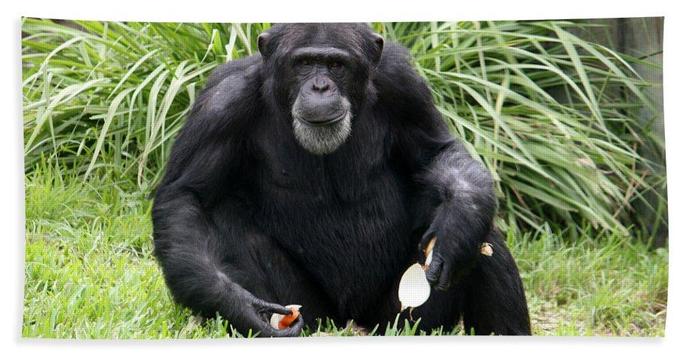 Chimpanze Bath Sheet featuring the photograph Grey Beard by David Nicholls